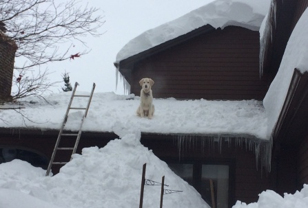 dog sitting on roof above tall snow pile.